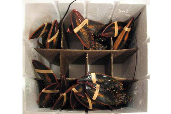 lobsters in a container